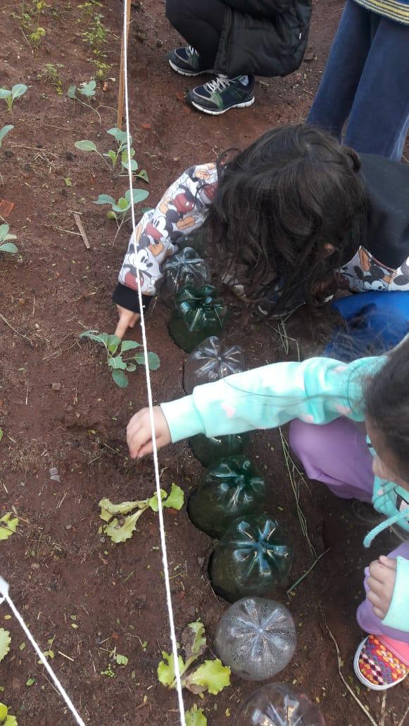 """EMEFEI """"Walter Carrer"""" tem projeto """"Horta: alimentação saudável"""""""