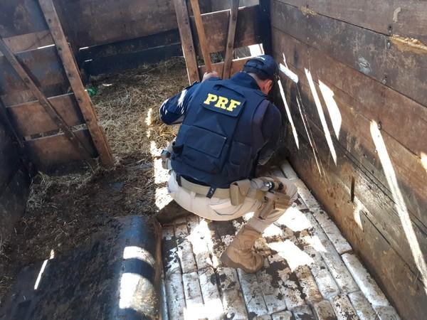 Dupla é presa transportando mais de 800 quilos de maconha em caminhão com cavalos em rodovia de Ourinhos