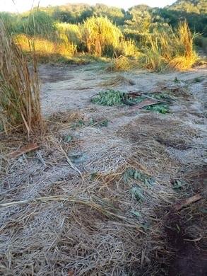 Botucatu: Com frio intenso, área rural da cidade tem registro de geada