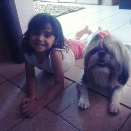 Cadela morre ao evitar ataque de pit bull a menina em Bauru