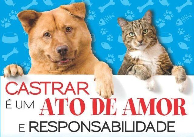 Mutirão castra 92 cães em Barra Bonita